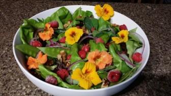 Nasturtium salad 4