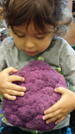 Bodhi and purble cauliflower