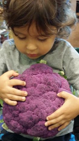 Bodhi and purble cauliflower