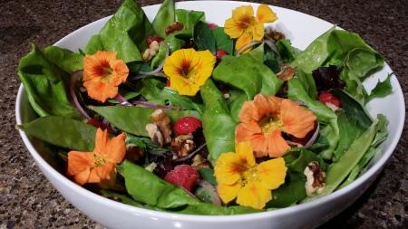 Nasturtium salad 2